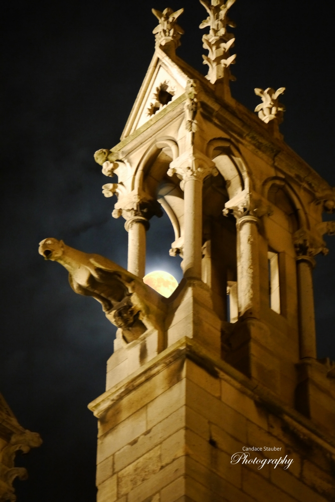 9. Toto, We're Not in Kansas Anymore-Gargoyles Watch Over Us